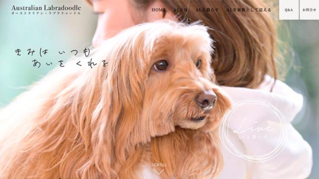 日本で唯一、「オーストラリアンラブラドゥードル(AL)」。 オンリーワンのブリーディング犬PRサイト。